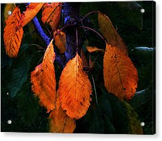 Old Orange Leaves Acrylic Print