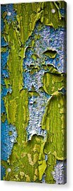 Old Paint Acrylic Print by Frank Tschakert