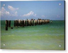 Old Pier  Naples Bay Acrylic Print by Carol Kinkead