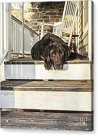 Old Porch Dog Acrylic Print by Diane Diederich