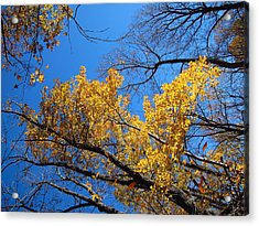 Old Rag Hiking Trail - 121217 Acrylic Print by DC Photographer