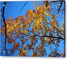 Old Rag Hiking Trail - 121218 Acrylic Print by DC Photographer