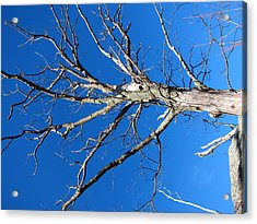 Old Rag Hiking Trail - 121241 Acrylic Print by DC Photographer