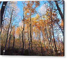 Old Rag Hiking Trail - 121258 Acrylic Print by DC Photographer