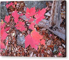 Old Rag Hiking Trail - 121259 Acrylic Print by DC Photographer
