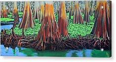 Old Swampy Acrylic Print