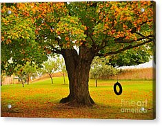 Old Tire Swing Acrylic Print by Terri Gostola