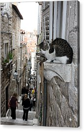 Old Town Alley Cat Acrylic Print by David Nicholls