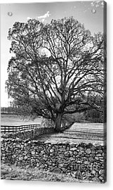 Acrylic Print featuring the photograph Old Tree In Black And White by John S
