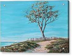 Old Tree In Carpenteria Acrylic Print by Tina Obrien