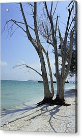 Acrylic Print featuring the photograph Old Tree by Laurie Perry