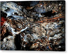 Old Tree Number 1 Acrylic Print by Peter Cutler