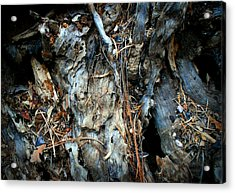 Old Tree Number 2 Acrylic Print by Peter Cutler