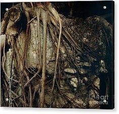 Old Tree On Broken Wall Acrylic Print by Yali Shi