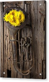 Old Tuba And Yellow Mums Acrylic Print by Garry Gay