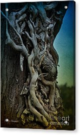Old Vine Acrylic Print by Mary Machare