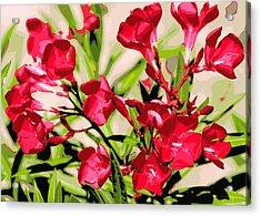 Oleander Red Acrylic Print by Sheri McLeroy