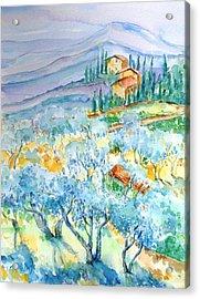 Olive Groves Of Cozille Tuscany  Acrylic Print by Trudi Doyle