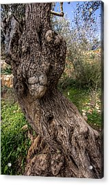 Olive Monster Acrylic Print