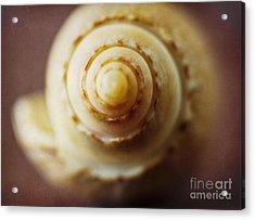 Olive Shell Acrylic Print by Elena Nosyreva