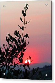 Olive Tree At Sunset Acrylic Print by Dorothy Berry-Lound
