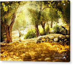 Acrylic Print featuring the photograph Olive Trees by Boon Mee