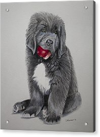 Acrylic Print featuring the painting Oliver's Red Ball by Sharon Nummer
