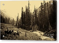 Olympic National Park Horse Packing Acrylic Print