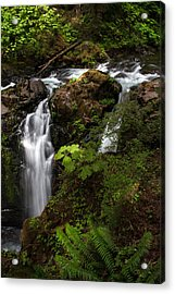 Olympic National Park Acrylic Print by Larry Marshall
