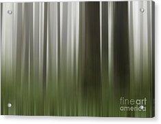 Olympic Trees Acrylic Print