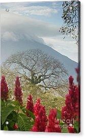 Acrylic Print featuring the photograph Ometepe Island 1 by Rudi Prott