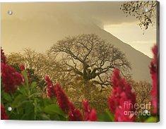 Acrylic Print featuring the photograph Ometepe Island 2 by Rudi Prott