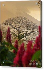Ometepe Island Nicaragua 4 Acrylic Print by Rudi Prott