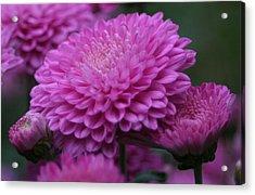 Omg Pink Acrylic Print