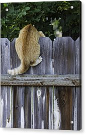 Omg There Is A Dog Down There Acrylic Print