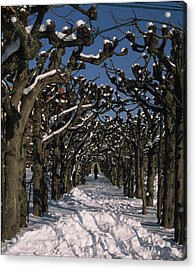On A Cold Winter Day Acrylic Print by Angela Bruno