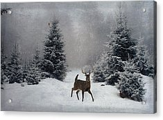 On A Snowy Evening Acrylic Print by Lianne Schneider