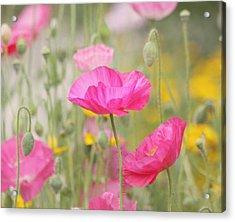 On A Summer Day - Pink Poppy Acrylic Print by Kim Hojnacki