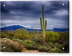 On A Winter's Day In The Sonoran Desert  Acrylic Print by Saija  Lehtonen