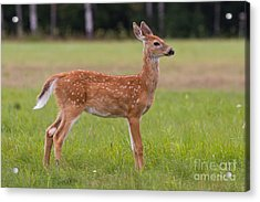 On Alert Acrylic Print by Kevin McCarthy