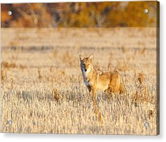Acrylic Print featuring the photograph On Alert by Shirley Heier