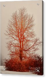 On Fire In The Fog Acrylic Print by Lois Bryan