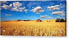 On Golden Fields Acrylic Print