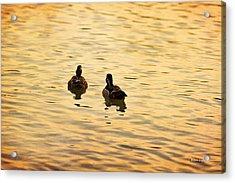 On Golden Pond Ducks Acrylic Print by Angela A Stanton