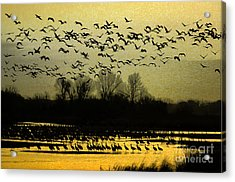 On Golden Pond Acrylic Print by Elizabeth Winter