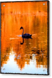 On Golden Pond Acrylic Print by Jack Gannon