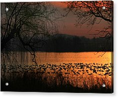 On Golden Pond Acrylic Print by Lori Deiter