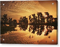 On Golden Ponds Acrylic Print by Adrian Campfield