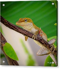 Acrylic Print featuring the photograph On Guard Squared by TK Goforth