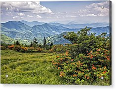 On Roan Mountain 10 Acrylic Print